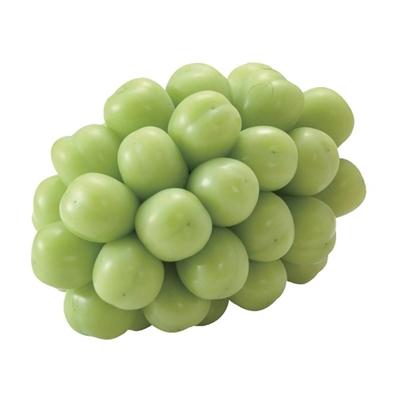 長野麝香葡萄